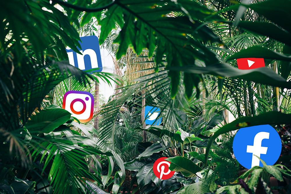 Social media kanalen jungle